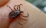 Seven dead, 60 infected by new tick-borne virus in China, says media reports